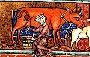 Medieval women milks a cow
